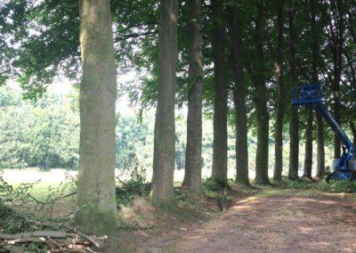 Onderhoud-aan-bomen-laan_preview
